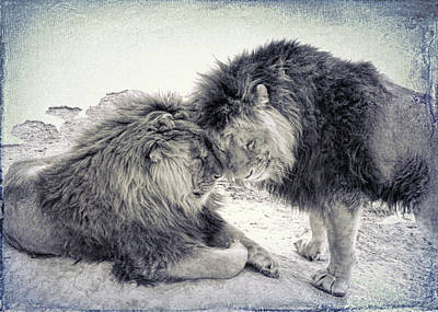 Photograph - Two Brothers by OLena Art Brand