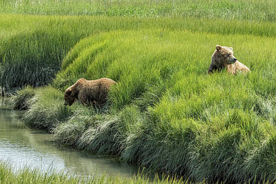 Photograph - Two Brown Bear Cubs In A Meadow Of Variegated Greens by Belinda Greb