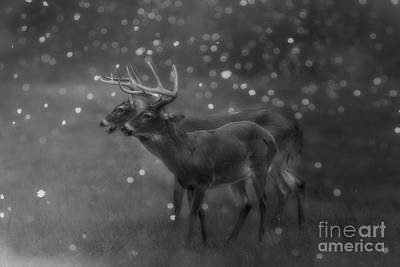 Digital Art - Two Bucks by Geraldine DeBoer