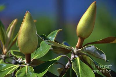 Photograph - Two Buds by Diana Mary Sharpton