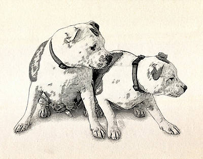 Bull Terrier Drawing - Two Bull Terriers by Michael Tompsett