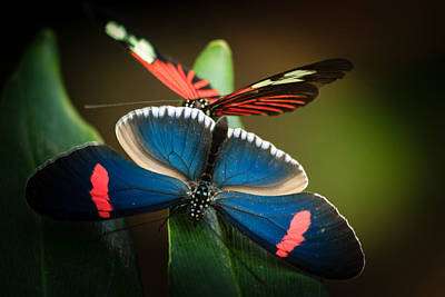Photograph - Two Butterflies by Joni Eskridge