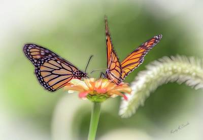 Digital Art - Two Butterflys Working On A Flower. by Rusty R Smith