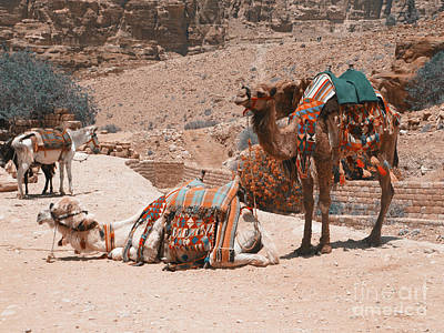 Photograph - Two Camels Petra by Donna Munro
