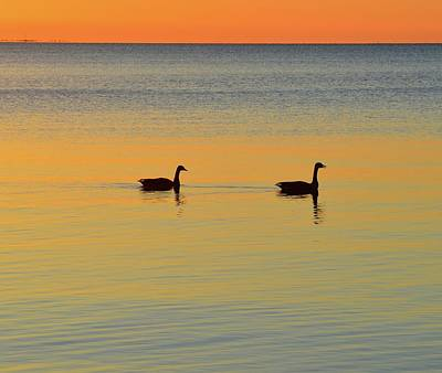 Digital Art - Two Canadian Geese  by Lyle Crump