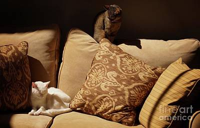 Photograph - Two Cats by John Kolenberg