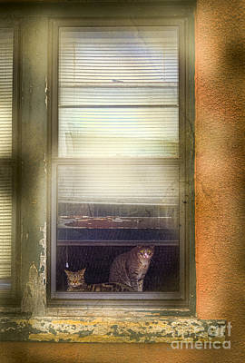 Photograph - Two Cats Of Elm by Craig J Satterlee