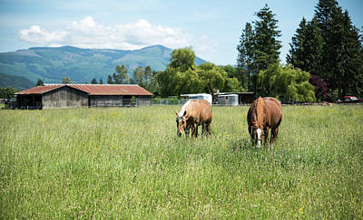 Photograph - Two Chestnut Horses In A Grassy Field by Tom Cochran