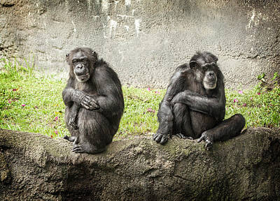 Photograph - Two Chimps by Al Hurley