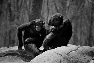 Photograph - Two Chimps I Bw by David Gordon
