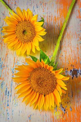 Two Classic Sunflowers Art Print