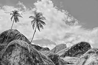 Photograph - Two Coconut Trees by Olga Hamilton