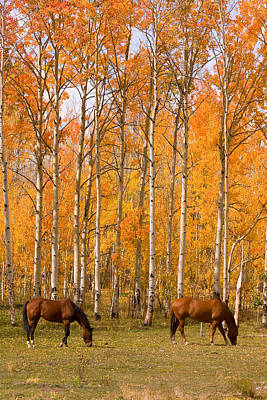 Two Colorado High Country Autumn Horses Art Print by James BO  Insogna