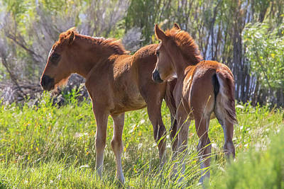 Photograph - Two Colts At Washoe Lake by Marc Crumpler