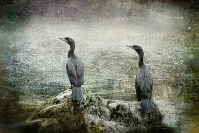 Photograph - Two Cormorants by Belinda Greb