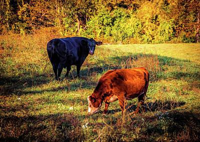 Animal Watercolors Juan Bosco - Two cows by Lilia D