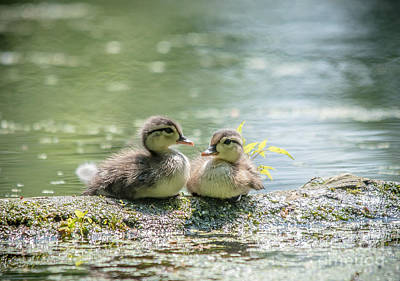 Photograph - Two Cute Wood Ducklings by Cheryl Baxter