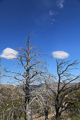 Photograph - Two Dead Trees And Two Clouds by Mary Bedy