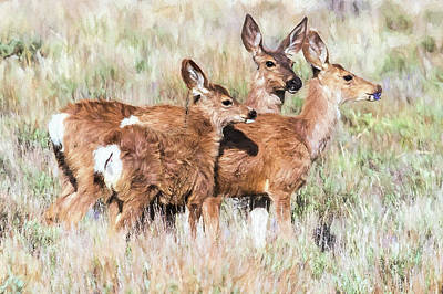 Photograph - Two Deer, A Fawn And A Flower by Belinda Greb