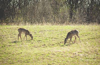Photograph - Two Deer Grazing by Cheryl Baxter