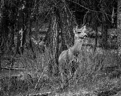 Black_white Photograph - Two Deer Hiding Amongst Trees And Bushes In Black And White by Al Rempel