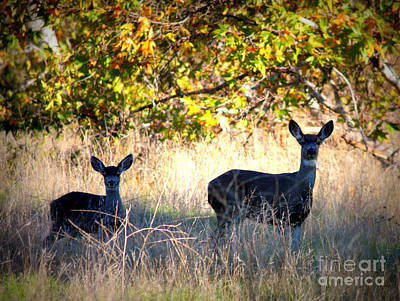 Photograph - Two Deer In Autumn Meadow by Carol Groenen