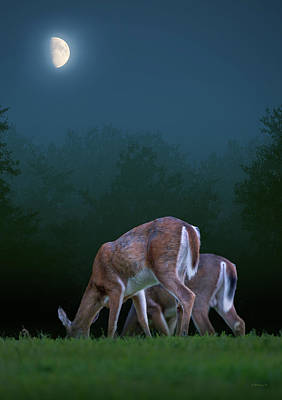 Photograph - Two Deer Under The Moon by Brian Wallace