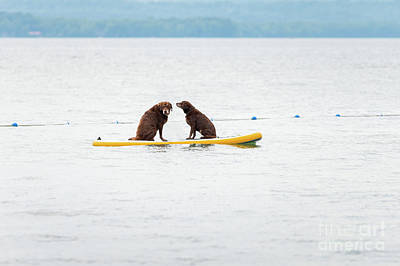 Photograph - Two Dogs On A Paddle Board by Les Palenik