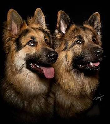 Painting - Two Dogs by Ralph Taylor