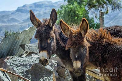 Two Donkeys Art Print by Patricia Hofmeester