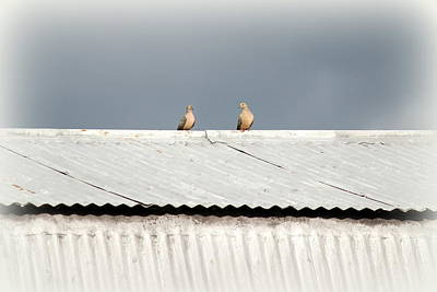 Photograph - Two Doves by Beth Vincent
