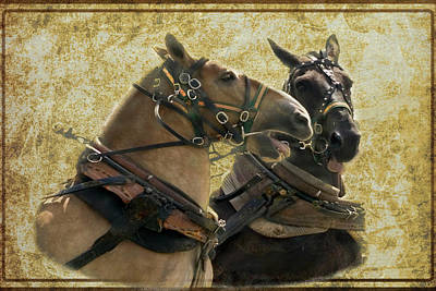 Digital Art - Two Draft Horses In Harness by Rusty R Smith