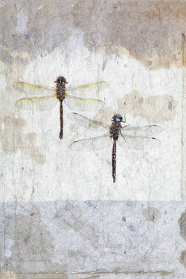 Dragonfly Photograph - Two Dragonflies by Carol Leigh