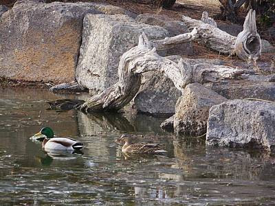 Photograph - Two Ducks by Angi Parks
