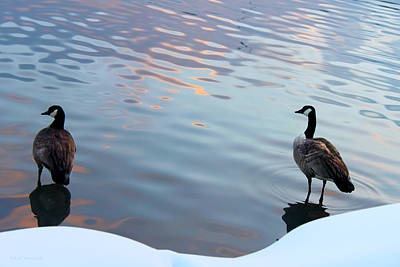 Photograph - Two Ducks In The Snow by Susan Vineyard