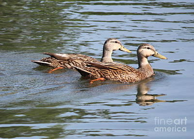 Photograph - Two Ducks On The Pond by Carol Groenen