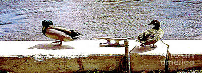 Photograph - Two Ducks On The Seawall by Merton Allen