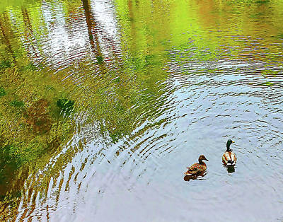 Photograph - Two Ducks Reflected Water by Roger Bester