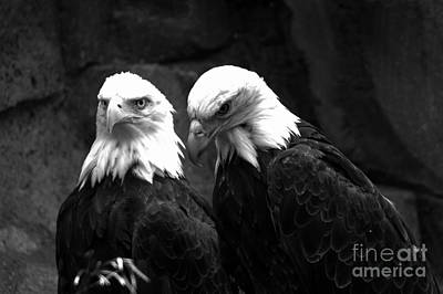 Photograph - Two Eagles Black And White by Adam Jewell