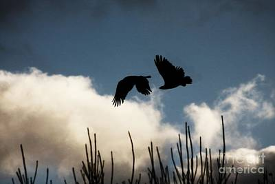 Photograph - Two Eagles by Ella Kaye Dickey