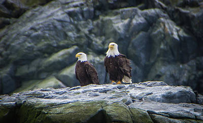 Photograph - Two Eagles by Marilyn Wilson