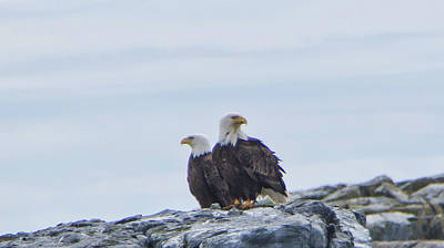 Photograph - Two Eagles Sit by Marilyn Wilson