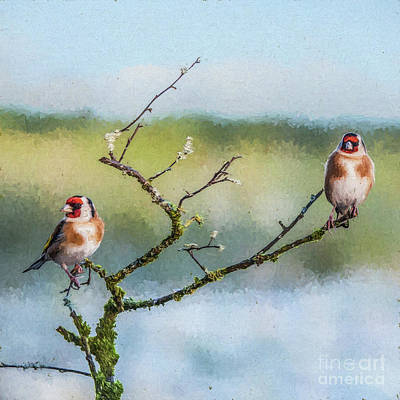 Digital Art - Two European Goldfinches Carduelis Carduelis by Liz Leyden