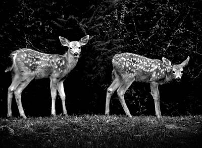 Photograph - Two Fawns by Adria Trail