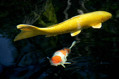 Photograph - Two Fish by Christopher Woods