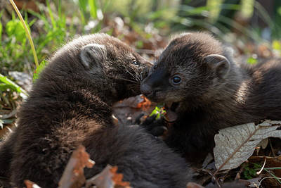 Photograph - Two Fisher Siblings by Dan Friend