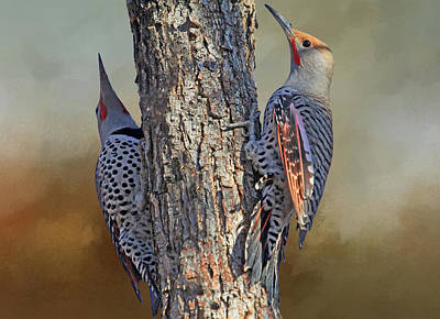Photograph - Two Flickers by Donna Kennedy