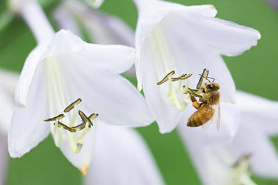 Photograph - Two Flowers For Every Bee 2 by Brian Hale