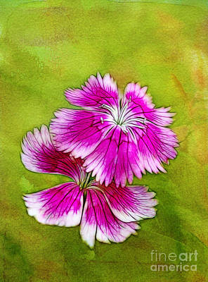 Photograph - Two Flowers by Judi Bagwell