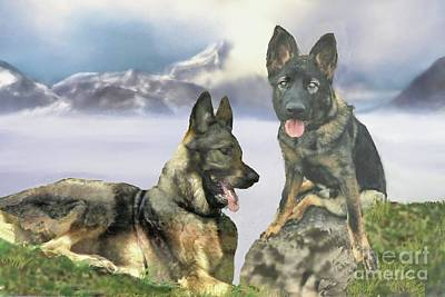 Photograph - Two German Shepherds by Janette Boyd and John Noyes